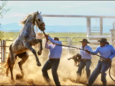 Tygh Ridge All Indian Rodeo Tradition: Men's Wildhorse Race