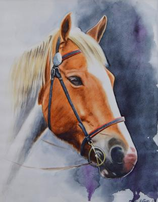 The beauty of the American Quarter Horse, 42cm x 33cm, 2018