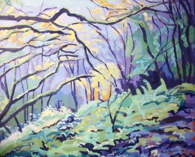 Coastal woods at Bucks Mill, North Devon