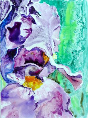 Iris reticulated