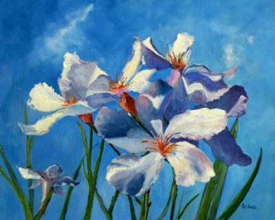 white flowers blue sky - oil - 24x30