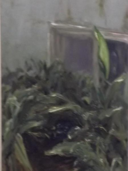 greens by a window