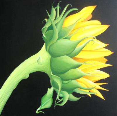"""Lisa's Sunflower.   36"""" x 36"""""""