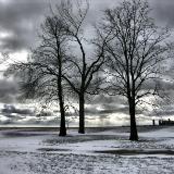 CHICAGO SKYLINE DWARFED BY TREES
