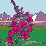 Alaska Florals