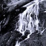 Fern Falls II