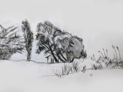 Trees and Beach House, Alameda