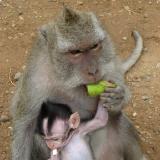 Monkey see. Monkey do.