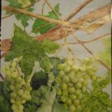 green grapes    SOLD