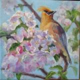 Spring Flowers: Apple Blossoms with Cedar Waxwing