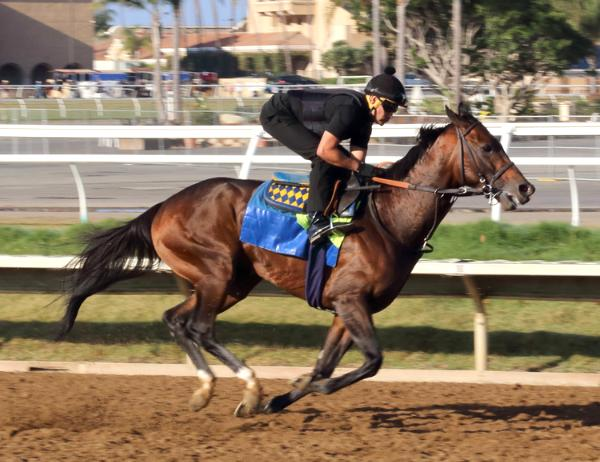 Del Mar Racetrack Morning Workout Thoroughbred Horses