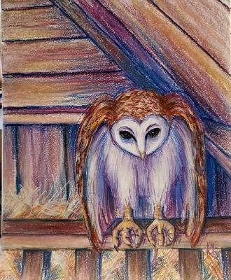 Barn Owl in Loft