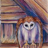 Owl in Barn Loft