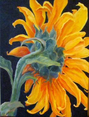 Seductive Sunflower V