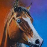 Pastel horse portraits