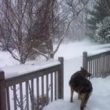 Amber's last snow