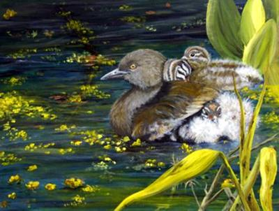 Least Grebe with Chicks