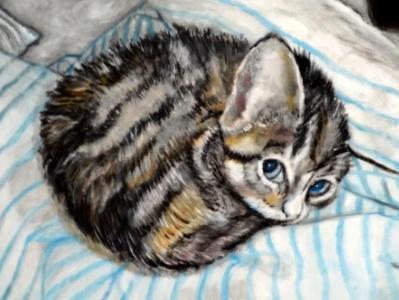 Nap time for Kitten