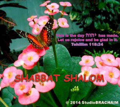 Ps 118:24~Shabbat Shalom