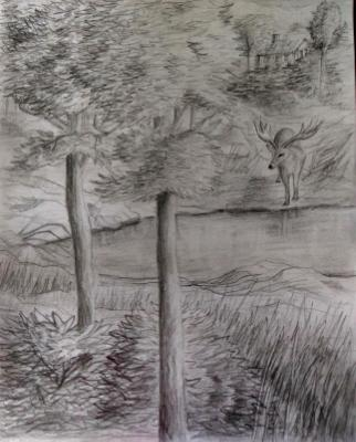 Deer at Pond
