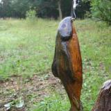 Fishing Bear Fish