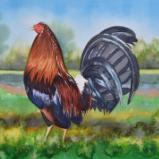 Custom rooster portrait, 35cm x 50cm, 2017