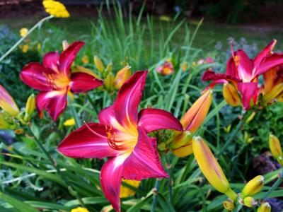 Lena's garden 1