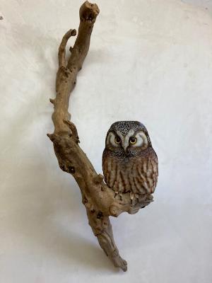 Life size Boreal Owl