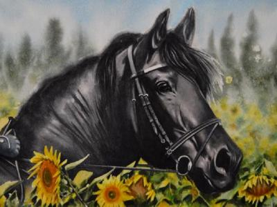 The beauty of the Friesian Horse, 38cm X 56cm, 2020
