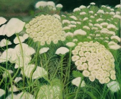 Queen Anne's Lace  17 1/2x20
