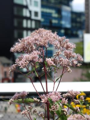 At the High Line #2